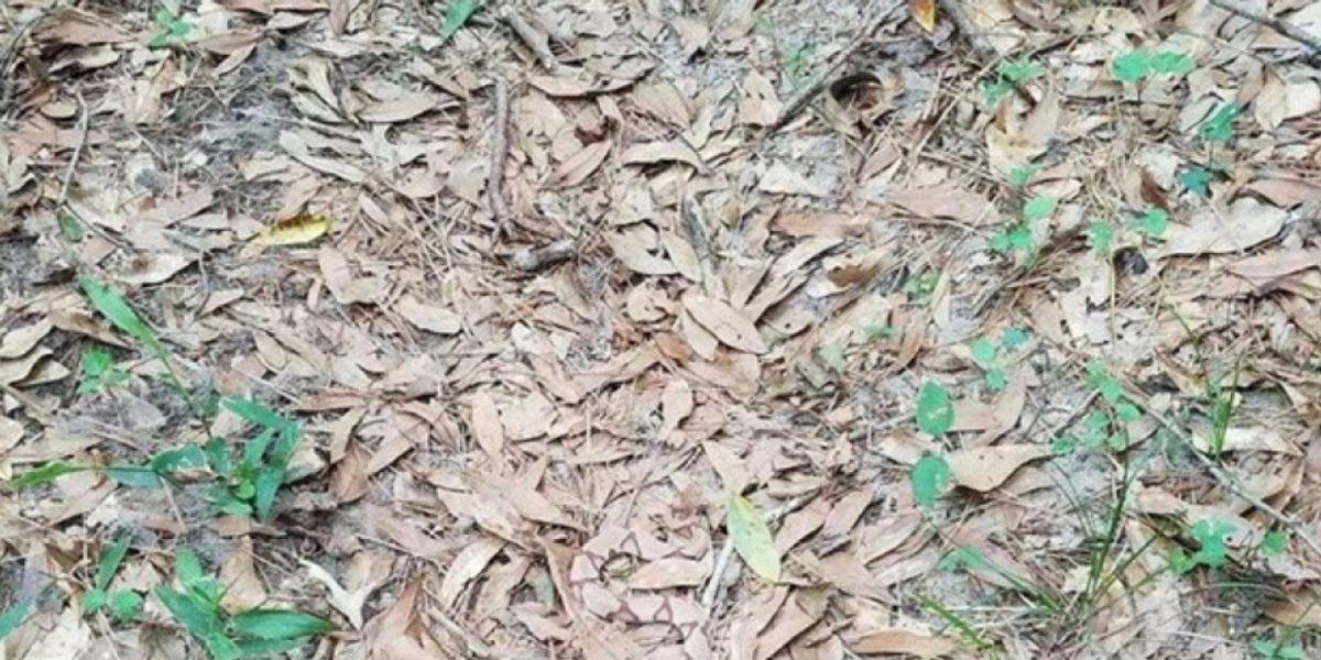 En esta imagen hay una serpiente, ¿la puedes ver?