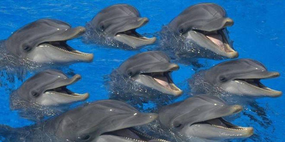 """Prohíben delfines en espectáculos, piden tratarlos como """"personas no humanas"""" en India"""