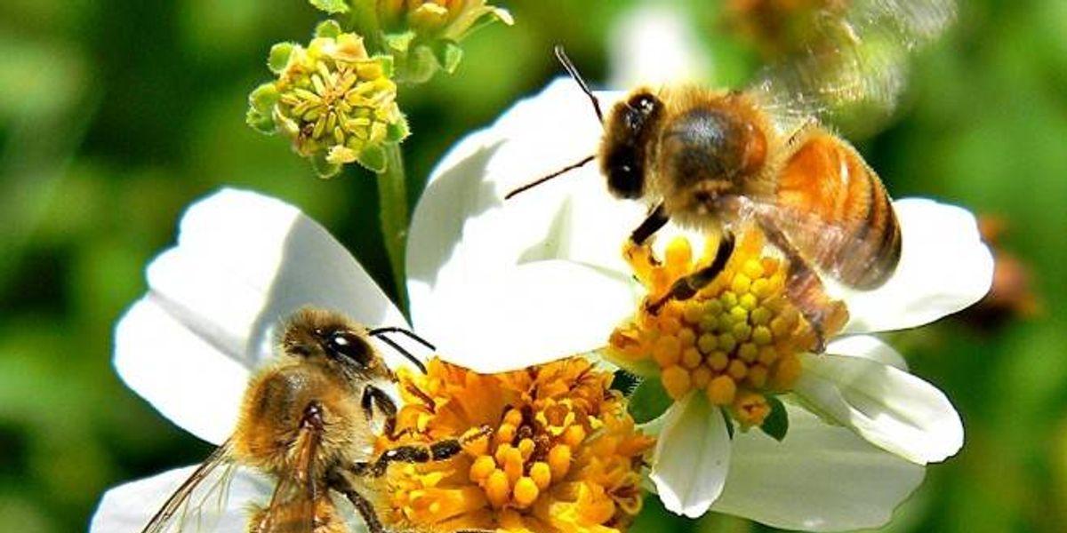 Holanda convierte paradas de autobuses en refugios para abejas