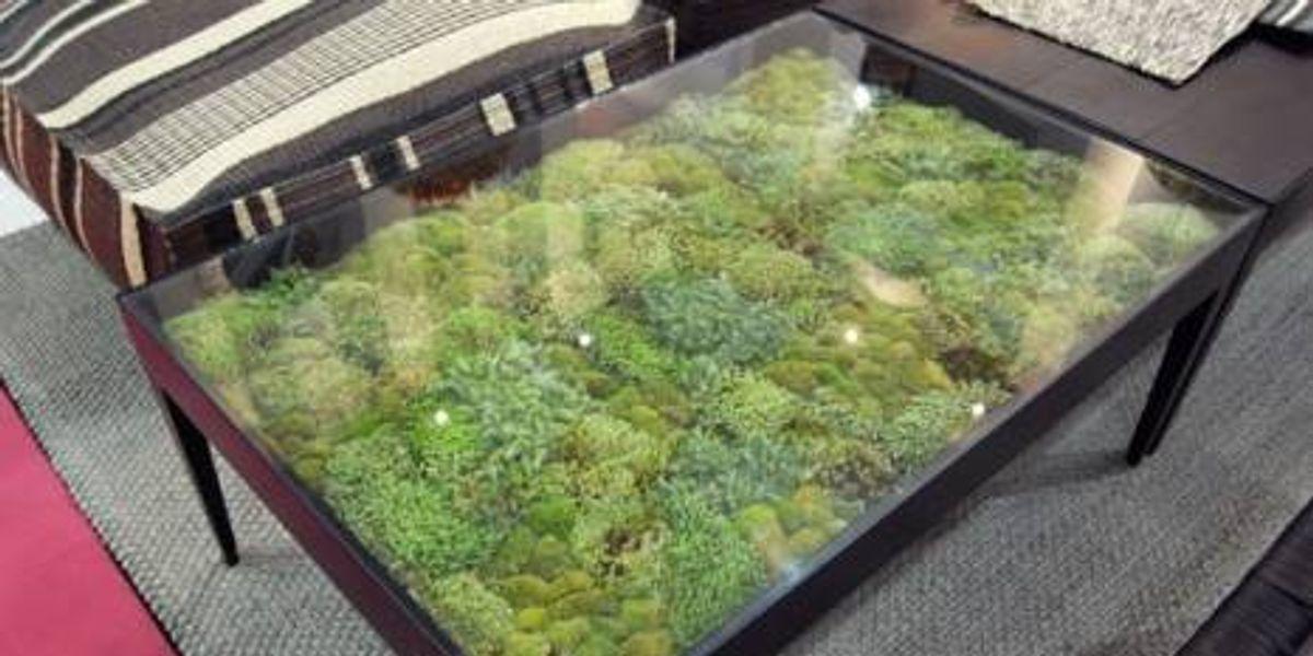 Mesas verdes vivas