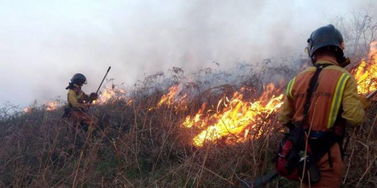 Biogel bloqueador de fuego a base de sub productos vegetales