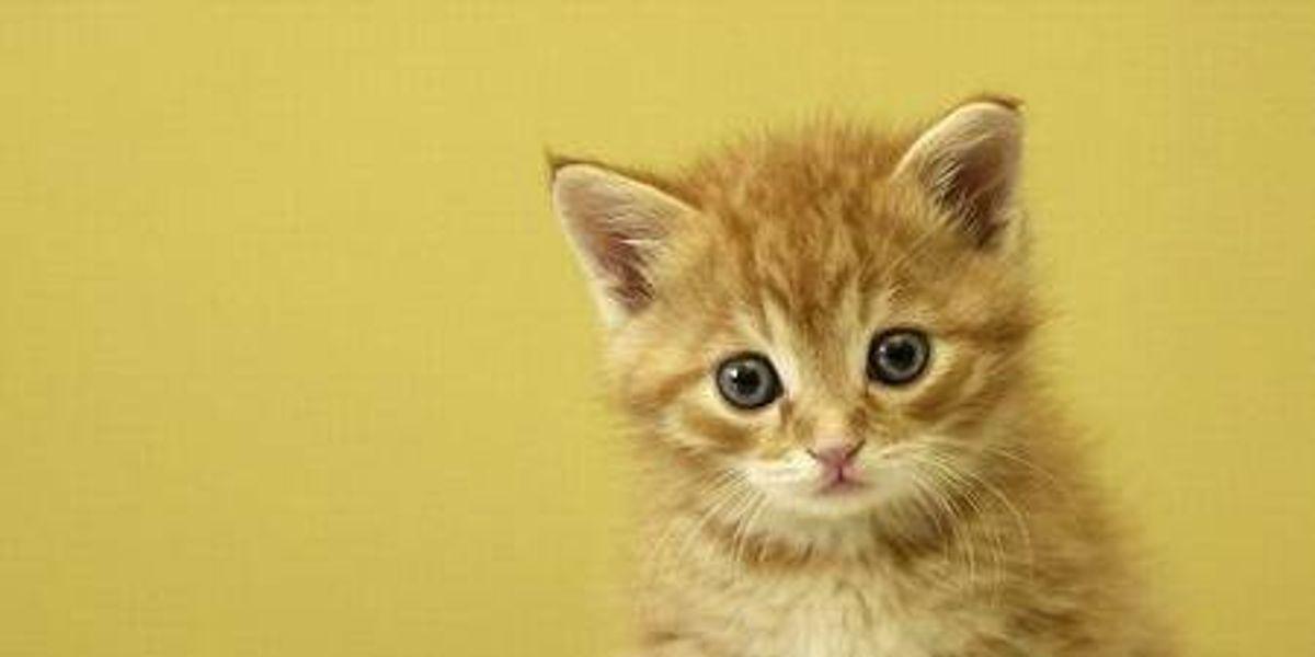 Cómo desactivar a un gato