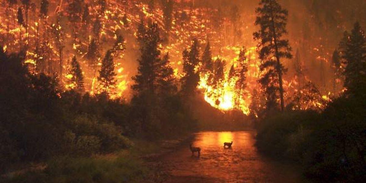 Chile: Incendio en Carahue deja 7 brigadistas muertos