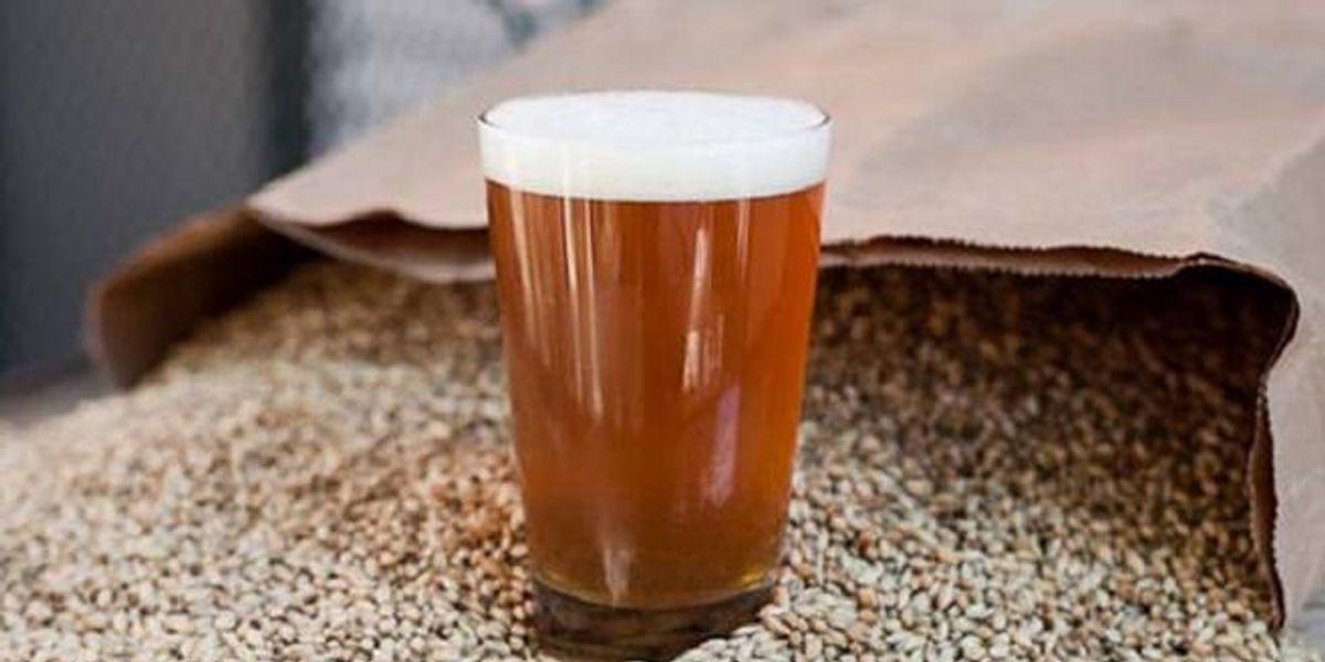 Conoce las cervezas India Pale Ale