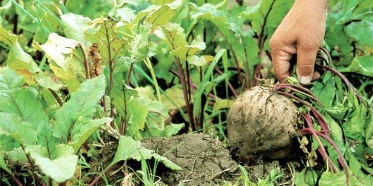 ¿Sabes lo que es la Permacultura? Te lo explicamos