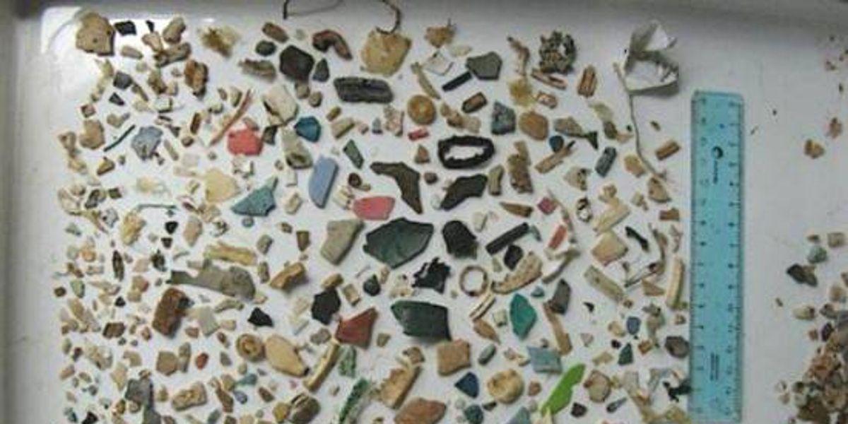 Terrible: Todo este plástico se encontró dentro del estómago de una tortuga