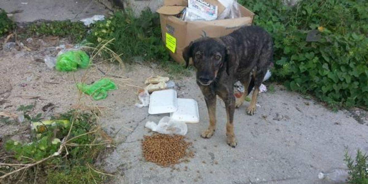 Perros y gatos, los otros afectados por las lluvias en Guerrero