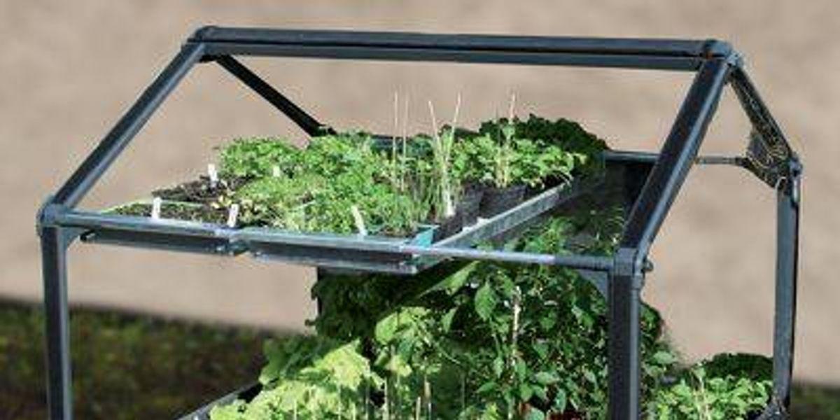 """Eco gadget: """"Jardín libre de pestes"""""""