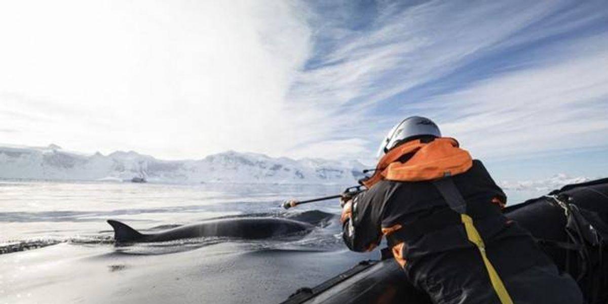 Estas increíbles imágenes muestran la desconocida vida de las ballenas en el Antártico