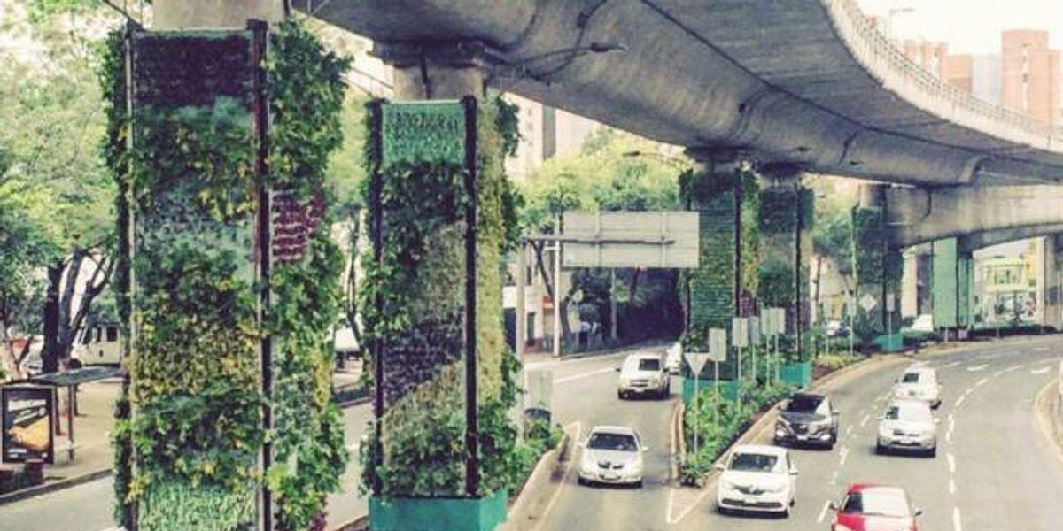 La avenida con más tráfico de México tendrá jardines verticales
