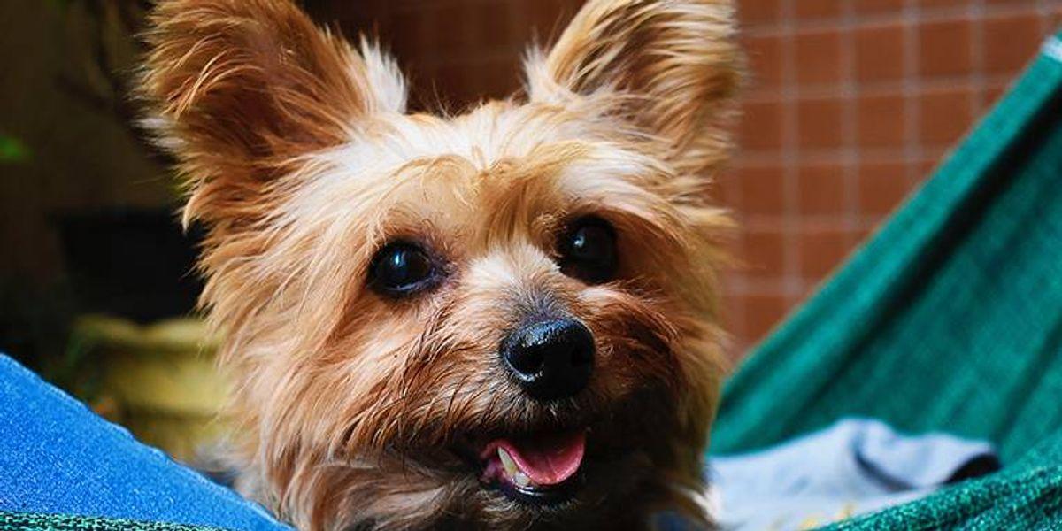 Tener un perro en la oficina reduce el estrés y eleva la productividad, según estudio