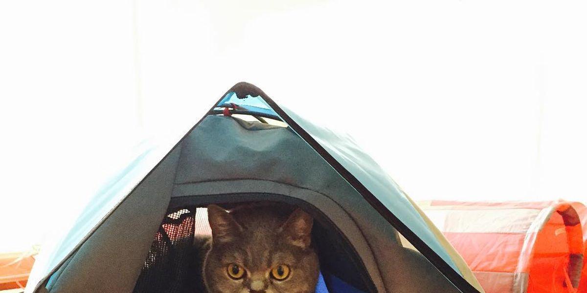 'Cat Camp', la nueva tendencia que utiliza mini carpas como camas para gatos