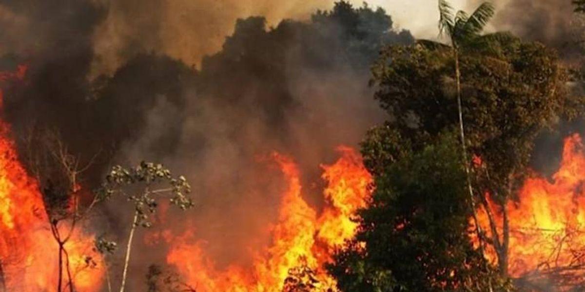 Estos han sido los incendios forestales de los últimos años que han consumido poco a poco al planeta