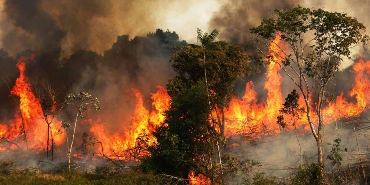 El segundo pulmón del mundo también se quema: incendios forestales en África superan a los de Amazonas