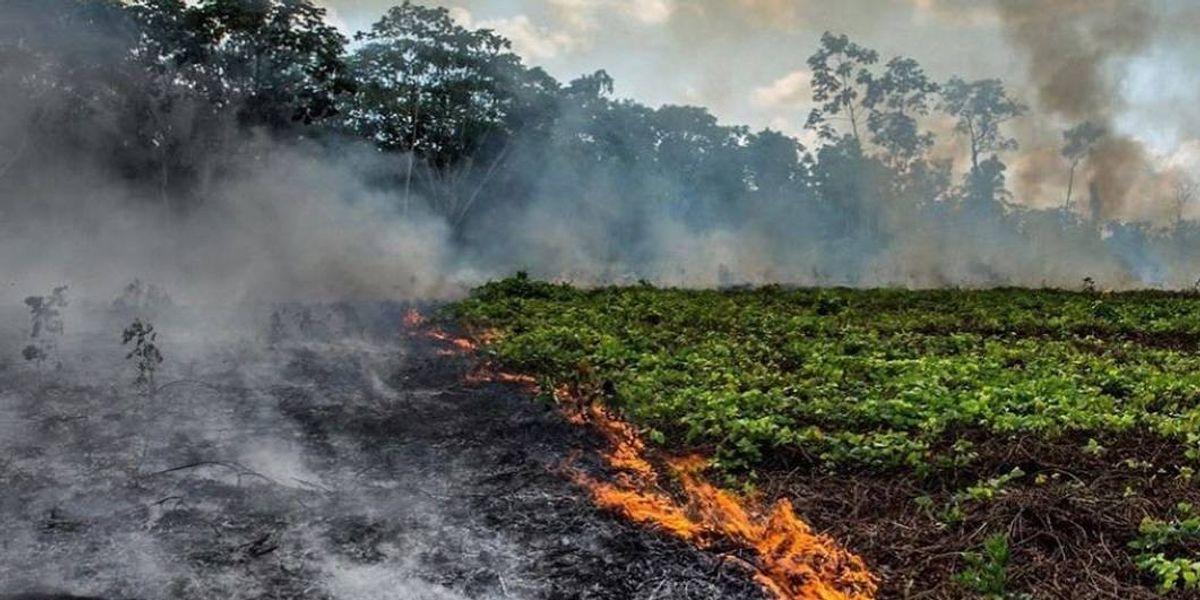 De no hacer nada, este es el terrible efecto de los incendios en el Amazonas