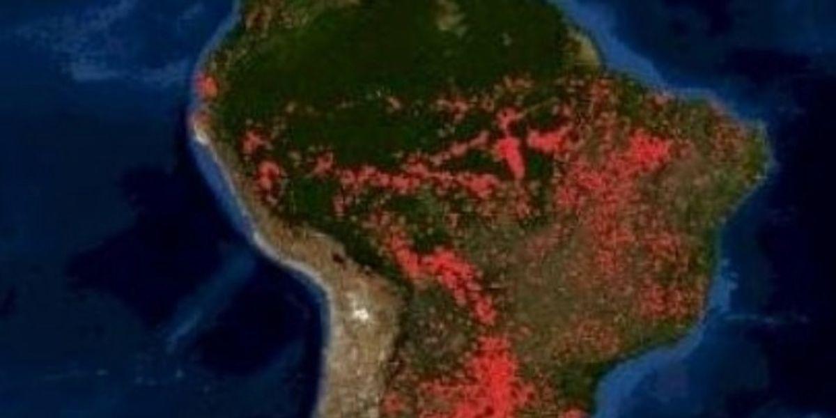 6 cosas que pasarían si la selva del Amazonas desaparece
