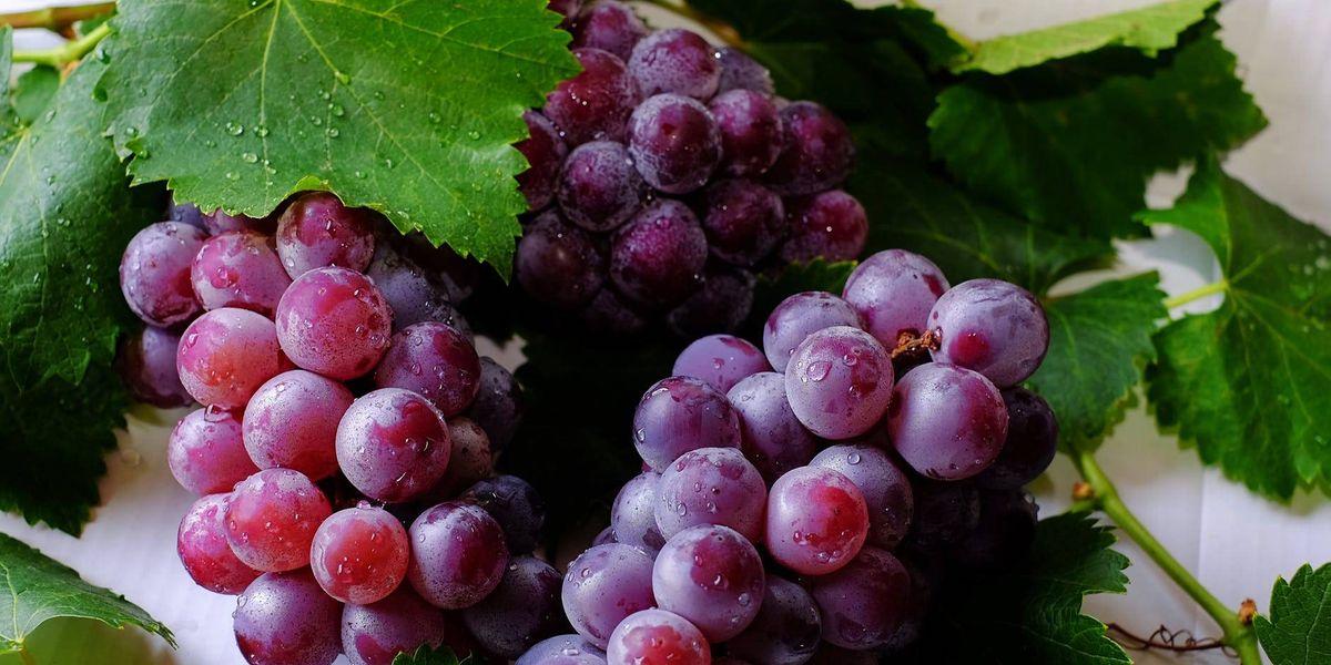 Estas son las magnificas propiedades de las uvas