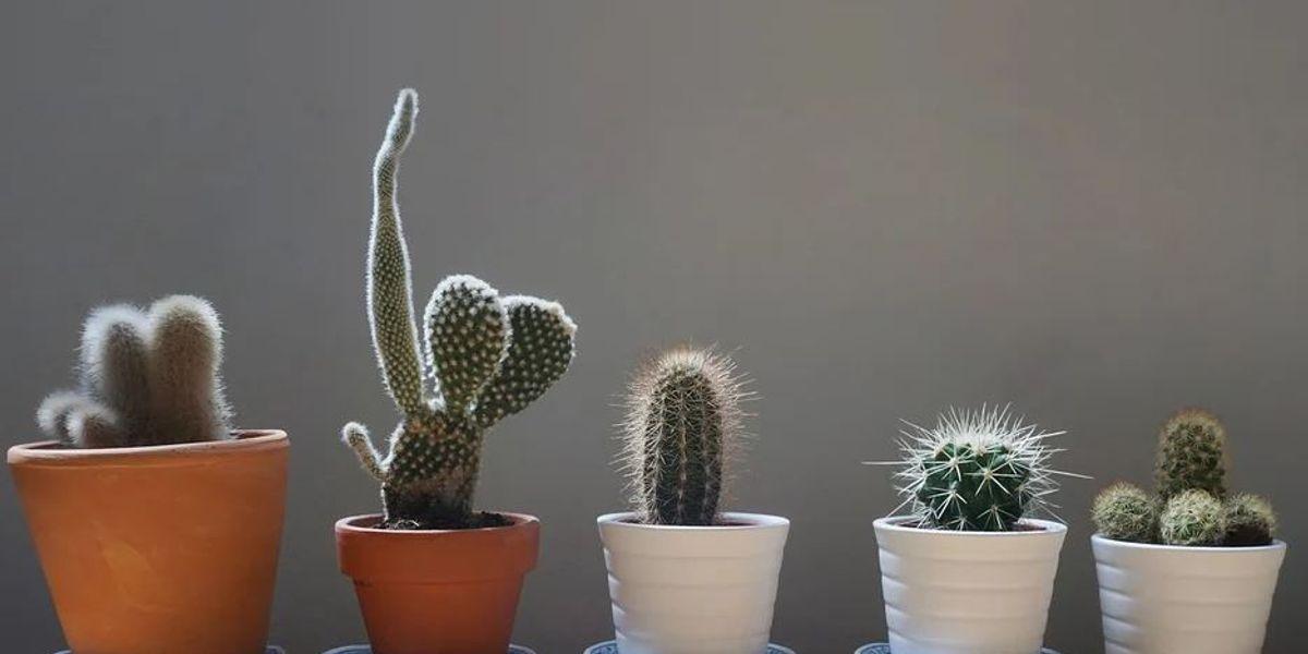 Seis cosas maravillosas que las plantas hacen por tu salud