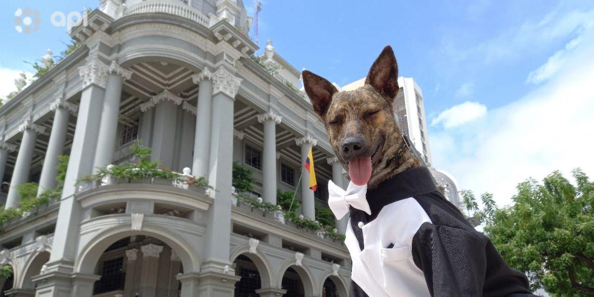 Zeus, el perro que era callejero y ahora forma parte de la guardia metropolitana de Guayaquil