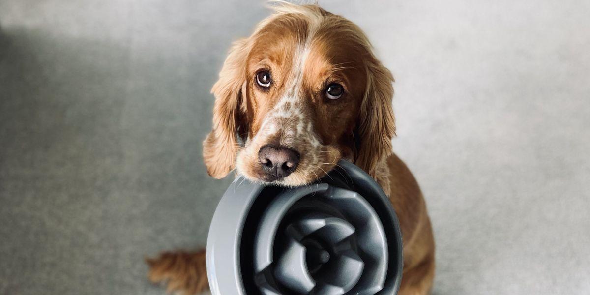 ¡Conoce los alimentos permitidos para tus mascotas!